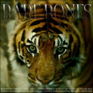 Barebones Album Cover